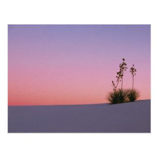 North America, America, New Mexico, White Postcard