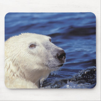 North America, Arctic Circle. Polar bear Mouse Pad
