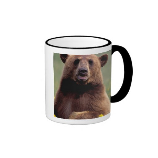 North America, California, cinnamon Black bear Mugs