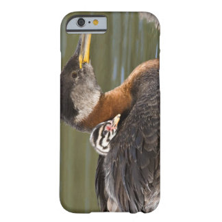 North America, Canada, British Columbia, Logan 2 Barely There iPhone 6 Case