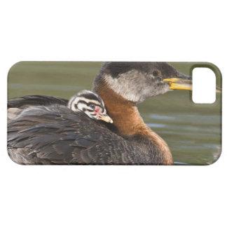 North America, Canada, British Columbia, Logan 2 iPhone SE/5/5s Case
