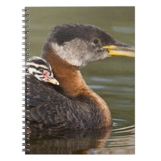 North America, Canada, British Columbia, Logan 2 Notebook