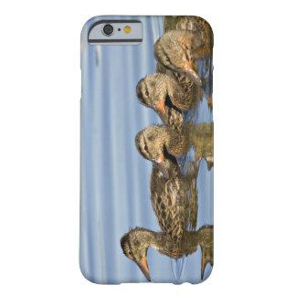 North America, Canada, British Columbia, Logan Barely There iPhone 6 Case