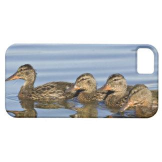 North America, Canada, British Columbia, Logan iPhone SE/5/5s Case