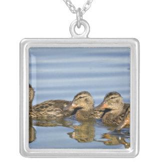 North America, Canada, British Columbia, Logan Square Pendant Necklace