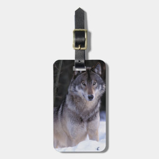 North America, Canada, Eastern Canada, Grey wolf Bag Tag