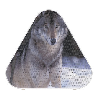 North America, Canada, Eastern Canada, Grey wolf Bluetooth Speaker