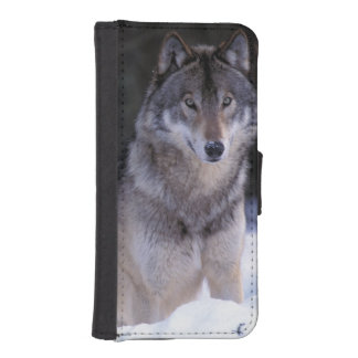 North America, Canada, Eastern Canada, Grey wolf iPhone SE/5/5s Wallet