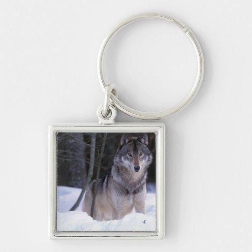 North America, Canada, Eastern Canada, Grey wolf Key Chains
