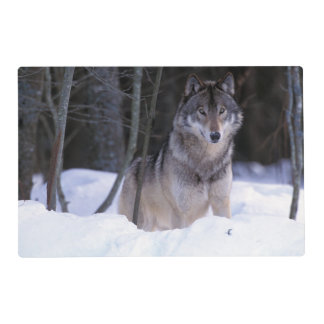 North America, Canada, Eastern Canada, Grey wolf Laminated Place Mat