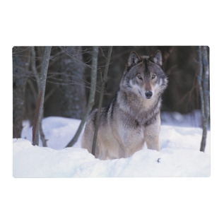 North America, Canada, Eastern Canada, Grey Wolf Placemat at Zazzle