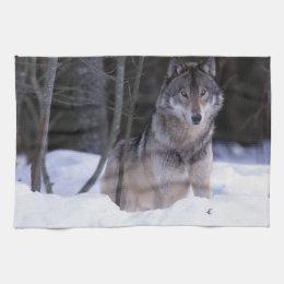 North America, Canada, Eastern Canada, Grey wolf Towel