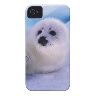 North America, Canada, Gulf of St. Lawrence. 2 Case-Mate iPhone 4 Cases