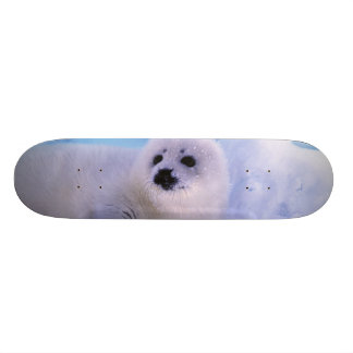 North America, Canada, Gulf of St. Lawrence. 2 Skateboard Deck