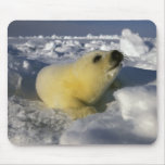 North America, Canada, Gulf of St. Lawrence. 3 Mouse Pad
