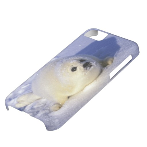 North America, Canada, Gulf of St. Lawrence. 4 Cover For iPhone 5C