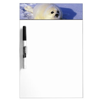 North America, Canada, Gulf of St. Lawrence. 4 Dry-Erase Board