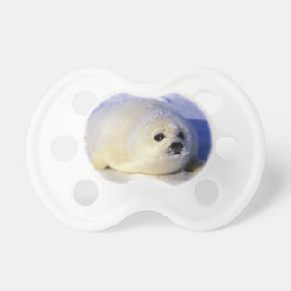 North America, Canada, Gulf of St. Lawrence. 4 Pacifier