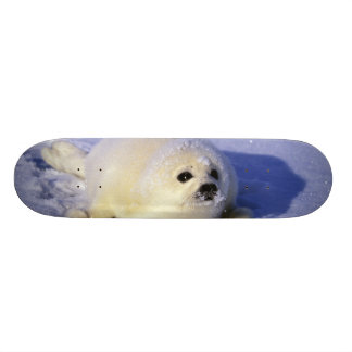 North America, Canada, Gulf of St. Lawrence. 4 Skateboard Deck