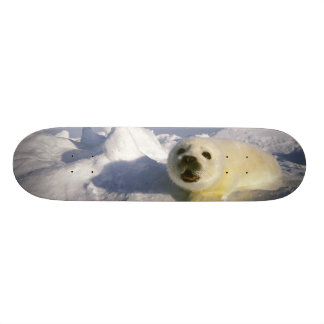 North America, Canada, Gulf of St. Lawrence. 5 Skateboard