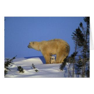North America, Canada, Manitoba, Churchill. 10 Card