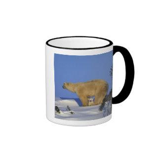 North America, Canada, Manitoba, Churchill. 10 Coffee Mugs