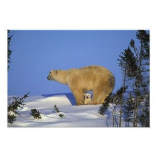 North America, Canada, Manitoba, Churchill. 10 Photo Print