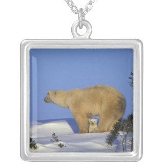 North America, Canada, Manitoba, Churchill. 10 Silver Plated Necklace