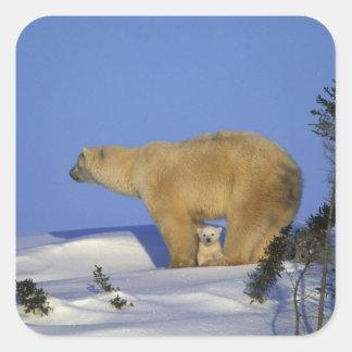 North America, Canada, Manitoba, Churchill. 10 Square Sticker