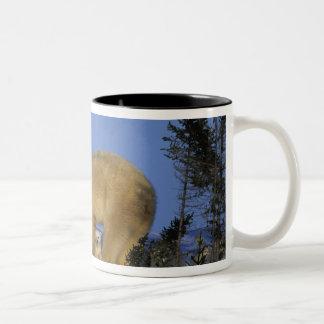 North America, Canada, Manitoba, Churchill. 10 Two-Tone Coffee Mug