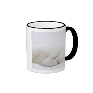 North America, Canada, Manitoba, Churchill. 3 Mug
