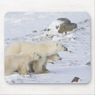 North America, Canada, Manitoba, Churchill. 4 Mouse Pad