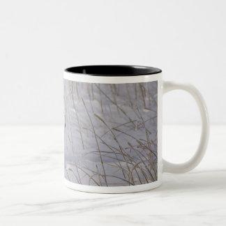 North America, Canada, Manitoba, Churchill. 4 Mug