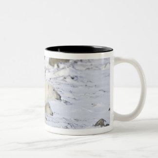 North America, Canada, Manitoba, Churchill. 4 Coffee Mugs