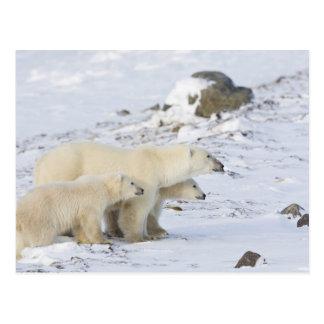 North America, Canada, Manitoba, Churchill. 4 Postcard