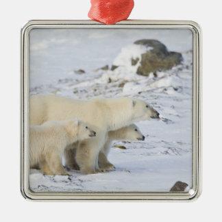 North America, Canada, Manitoba, Churchill. 4 Square Metal Christmas Ornament