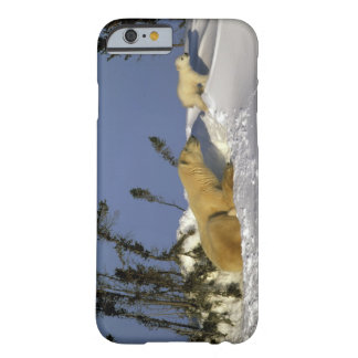North America, Canada, Manitoba, Churchill. 5 Barely There iPhone 6 Case