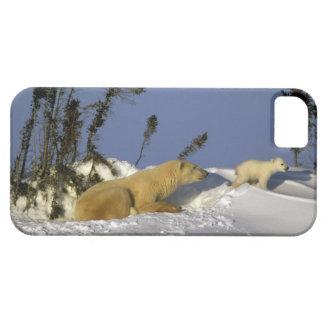 North America, Canada, Manitoba, Churchill. 5 iPhone SE/5/5s Case