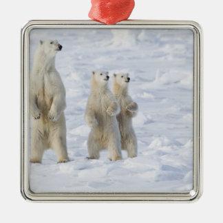 North America, Canada, Manitoba, Churchill. 5 Metal Ornament