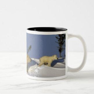 North America, Canada, Manitoba, Churchill. 5 Mugs