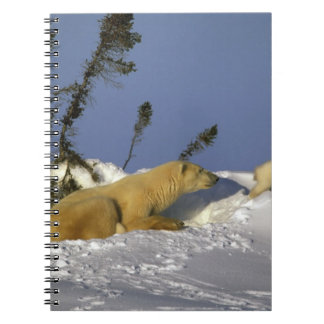 North America, Canada, Manitoba, Churchill. 5 Spiral Note Book