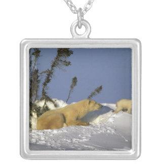 North America, Canada, Manitoba, Churchill. 5 Silver Plated Necklace
