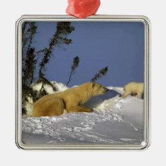North America, Canada, Manitoba, Churchill. 5 Square Metal Christmas Ornament
