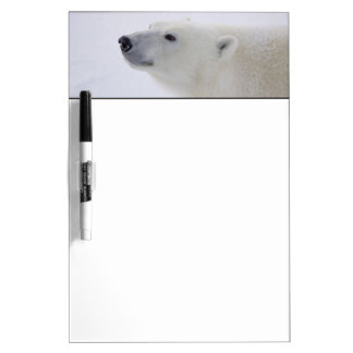 North America, Canada, Manitoba, Churchill. 6 Dry-Erase Board