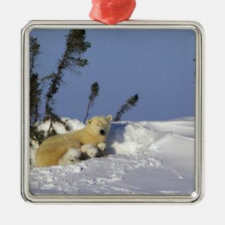 North America, Canada, Manitoba, Churchill. 7 Metal Ornament