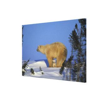North America, Canada, Manitoba, Churchill. 9 Canvas Print