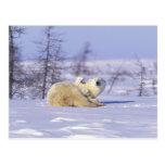 North America, Canada, Manitoba, Churchill. 9 Post Cards