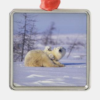 North America, Canada, Manitoba, Churchill. 9 Square Metal Christmas Ornament