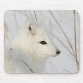 North America, Canada, Manitoba, Churchill. Mouse Pad