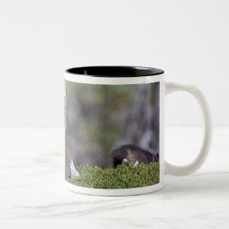 North America, Canada, Manitoba, Churchill. Coffee Mug